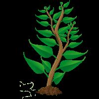 Wachstum Pflanze 3