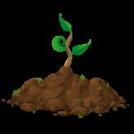 Wachstum Pflanze 1