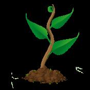 Wachstum Pflanze 2