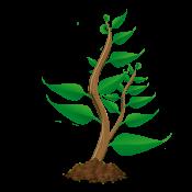 Wachstum Pflanze 4